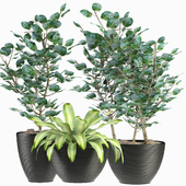 Collections Plants 4