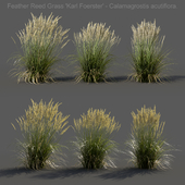 Feather Reed Grass - Calamagrostis acutiflora - Low