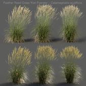 Feather Reed Grass - Calamagrostis acutiflora - High