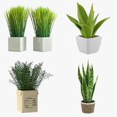 Комнатные растения в горшке - набор 1