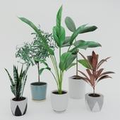 Комнатные растения в горшке - набор 2