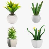 Комнатные растения в горшке - набор 3