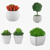 Комнатные растения в горшке - набор 5