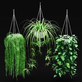 Набор свисающих растений в подвесных кашпо | Hanged Plants set in a hanging planters