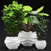 Bib plants in a planters, большие растения в кашпо