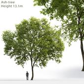 Ясень | Ash-tree #1 (17.1m)