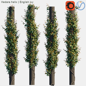 Hedera helix | English ivy on columns