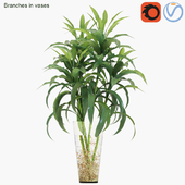 Branches in vases 22 : Lucky bamboo