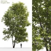 Ясень | Ash-tree #4 (18m)