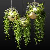 Светильники со свисающими растениями | The Lighters with a hanging plants