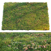 Lawn with clover and dry leaves
