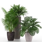 Коллекция комнатных растений 02