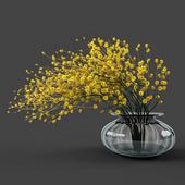 Vase acacia
