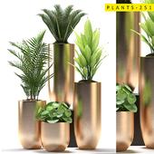 plants 251