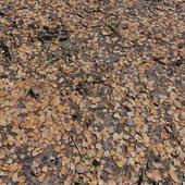 Земля_листья 2