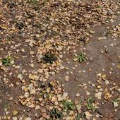 Земля_листья 3