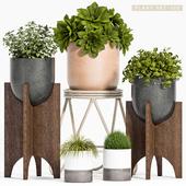 Plant set-122