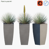 Plant in pots # 41: Agave