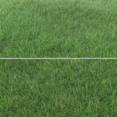Grass_Landscaping_02