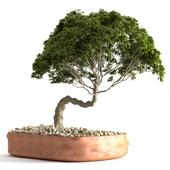 plant 51