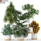 Plants collection 203