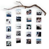 Photo branch