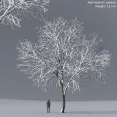 Ясень зимний   Ash-tree winter #1 (13.1m)