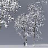 Ясень зимний   Ash-tree #2 winter (15.5-18.2m)