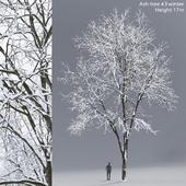 Ясень зимний   Ash-tree winter #3 (17m)