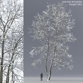 Ясень зимний   Ash-tree winter #4 (18m)
