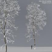 Ясень зимний   Ash-tree winter #5 (21.2m)