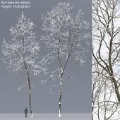 Ясень зимний   Ash-tree winter #6 (19.8-22.6)