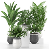 Houseplant Collection 03
