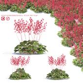 Гейхера цветы | Heuchera Brizoides `Pluie de Feu`