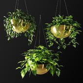 Ampel plants in gilded flower pots
