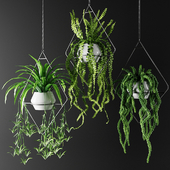 Plants in hanging flowerpots in diamonds | Plants in hanging flowerpots in diamonds