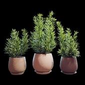 Plant set 07