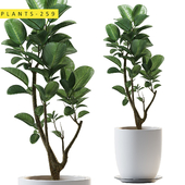 plants 259