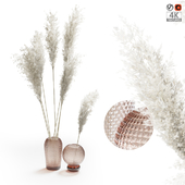 Pampas Grass In Glass Vases 01
