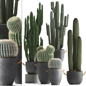 Collection of plants 411. Cactus set.