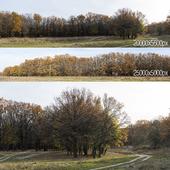 Дубовая роща. 2 панорамы