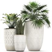 Коллекция растений 473.