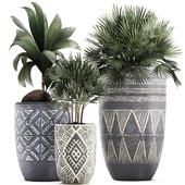 Коллекция растений 475.