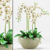 Plants 200