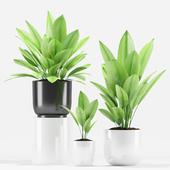 Plants 205