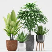 Plants 206
