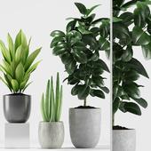 Plants 207