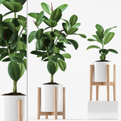 Plants 209