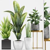 Plants 211