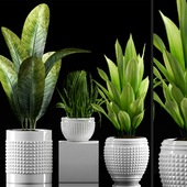 Plants 214